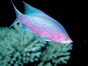 Tropical Fish   Fish Photo (5412577)   Fanpop