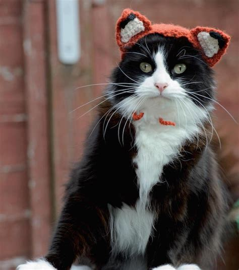 hats for cats knitting patterns cats in hats knit a dinosaur hat or crochet a fox hat for