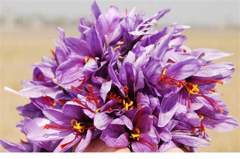 Bibit Bunga Of The Valley 5 bunga termahal yang ada di dunia 187 heboh