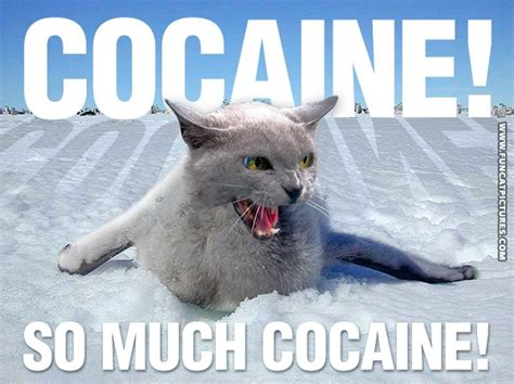 Cat Cocaine Meme - pin funny drugs pictures on pinterest