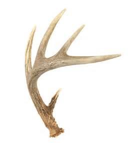 deer antlers for sale deer antler store