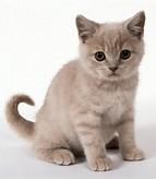 anak kucing angora | Foto-foto Kucing