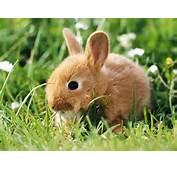 Bunny Rabbits Wallpapers