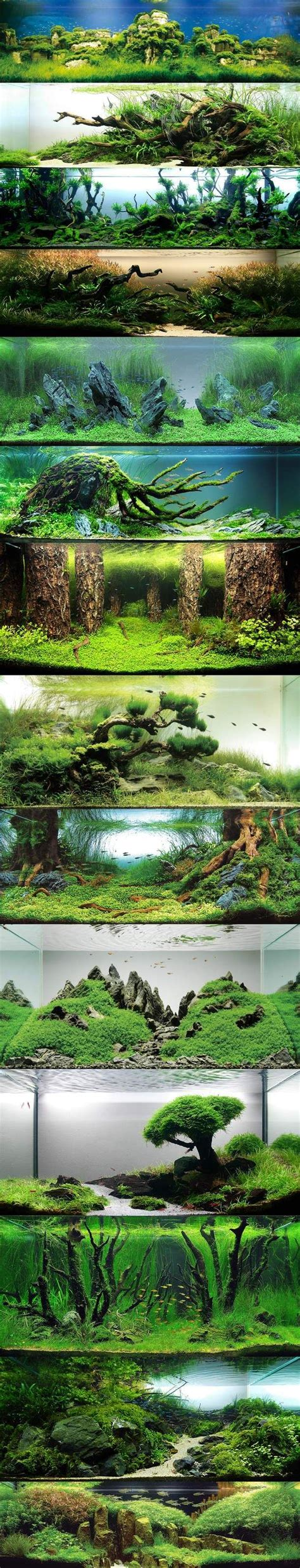 aquascape aquariums aquascaping fishes on pinterest aquascaping aquarium