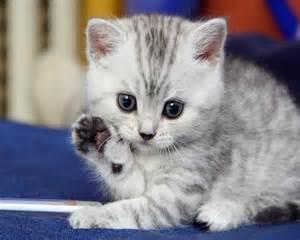 cute-<strong>kitten</strong>-saying-hello.jpg