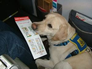certified comfort dog pet airways now flys pets to ten u s cities all pet news