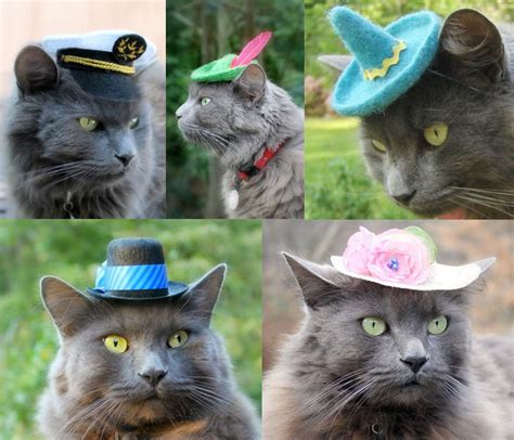 Kitchen Speakers hats for cats the green head