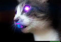 Trippy Cats Tumblr