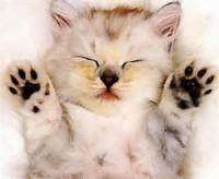 Cute Adorable Kitten