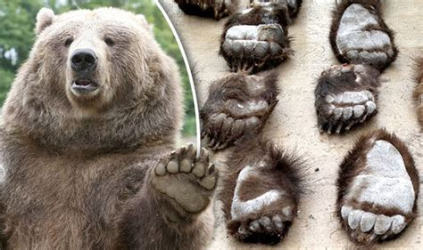 Conservationists furious at horror of BEAR PAW SOUP which sees animals BOILED ALIVE   Nature
