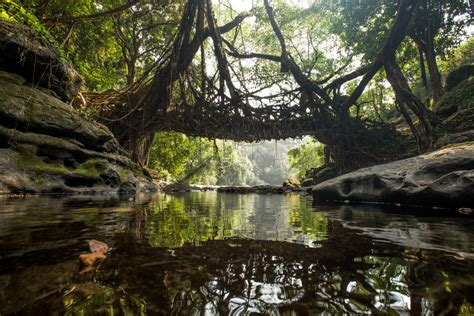 Living Bridges by Living Root Bridges Mike Marlowe