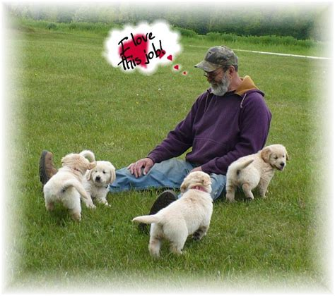 golden retriever club wisconsin golden retriever for sale wi dogs in our photo