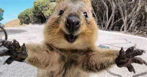 imagenes de animal wombat 161 no tengo tele animales abrazando humanos es lo m 225 s