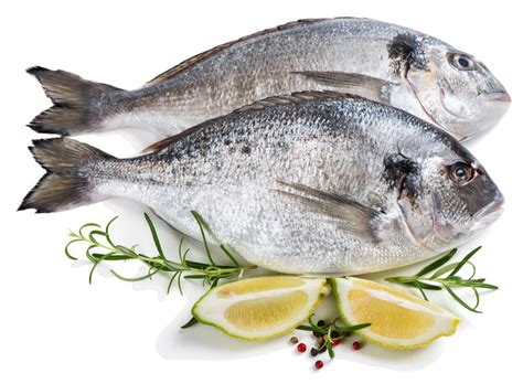 Ikan Segar Ikan Fresh Ikan Beku Ikan Kerapu Moso 1kg Up ikan kukus yang lembut dan tidak beraroma anyir