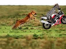 Funny Animal Racing