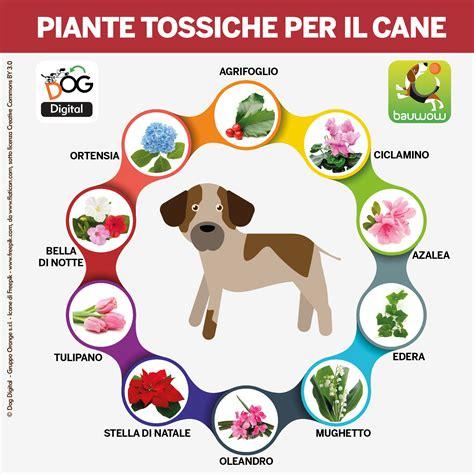Piante Tossiche Per Gatti by Cani E Piante Tossiche Qualche Consiglio Digital