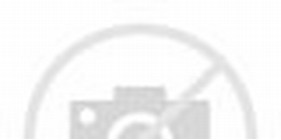 Beautiful Red Rose with White Background