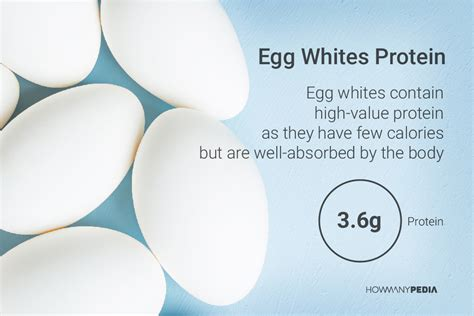 protein grams in eggs how many calories in an egg white howmanypedia