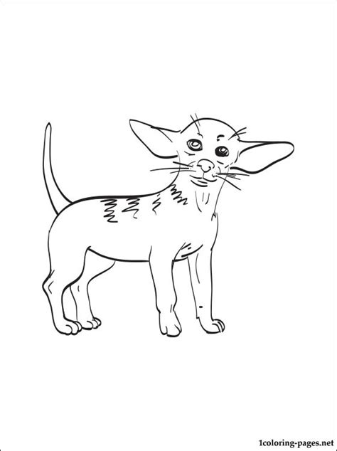 Chihuahua Colouring Pages Free Coloring Pages Of How To Draw Chiwawa by Chihuahua Colouring Pages