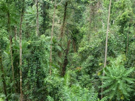 Forest Canopy Friday Photo The Mamu Rainforest Canopy Walkway Bubs On