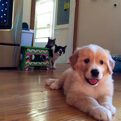 puppy cat 15 priceless pet reactions to the new puppy mnn nature network
