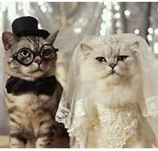 Inca O Colectie De Poze Cu Pisici Care Mai Haioase Enjoy