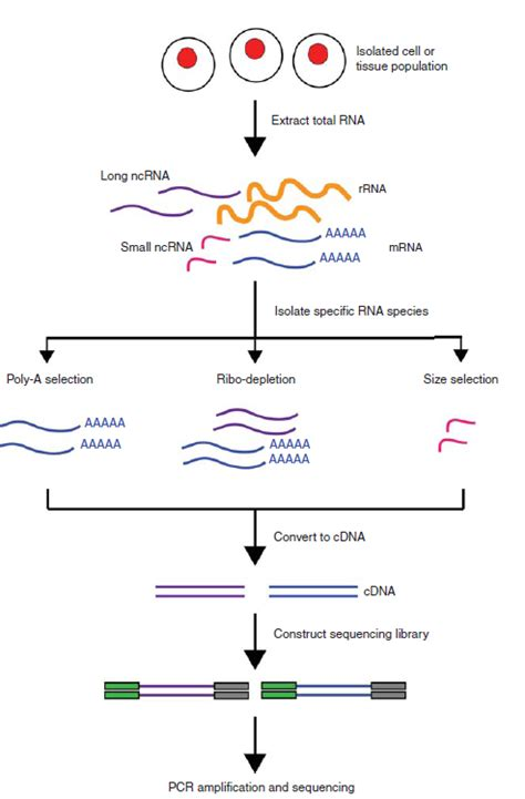 illumina sequencing protocol an introduction to rna seq methods applications