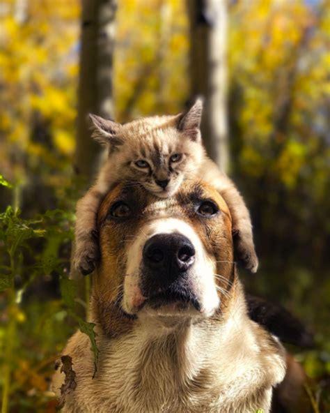colorado puppy henry the colorado and adventure cat baloo