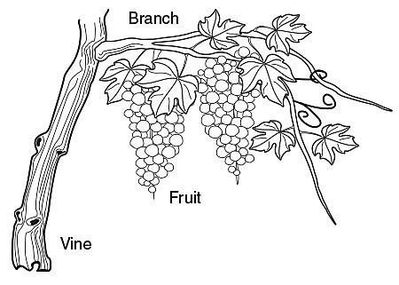 Coloring Page Vine And Branches by Vineyard Grape Coloring Page Coloring Coloring Pages