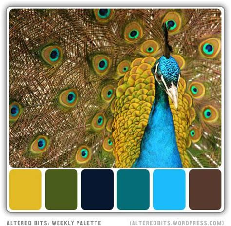 hue ology your weekly color inspiration peacock blue best 25 peacock colors ideas on pinterest purple