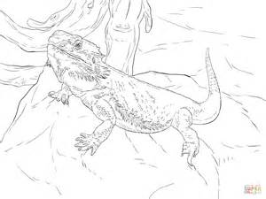 central bearded dragon coloring page free printable