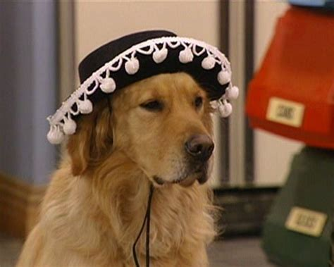the dog from full house 10 plot suggestions that would make full house more san