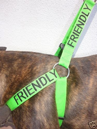 rottweiler accessories 17 best images about rottweiler accessories on leash harness and