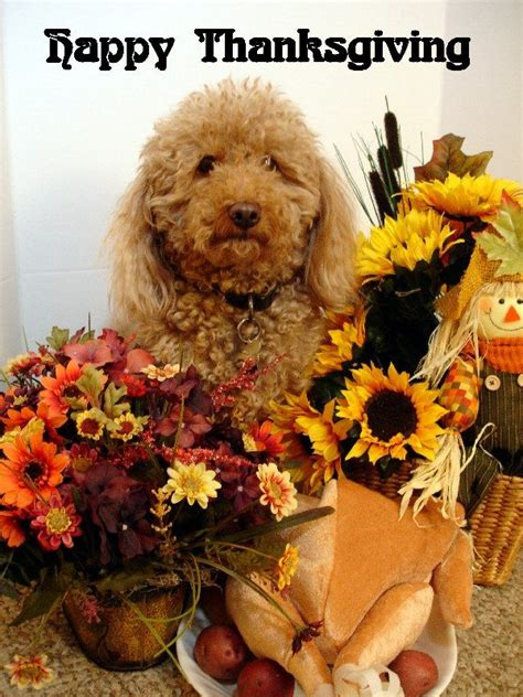 thanksgiving puppy 25 best thanksgiving dogs images on stuff accessories and dogs