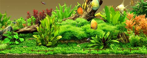 aquarium backgrounds wallpapers images pictures