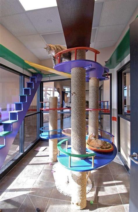 cat room cat furniture inclosures