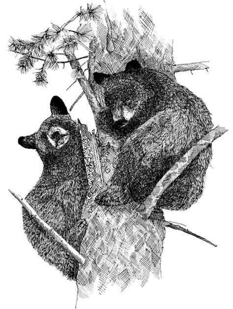black bears living with wildlife washington department