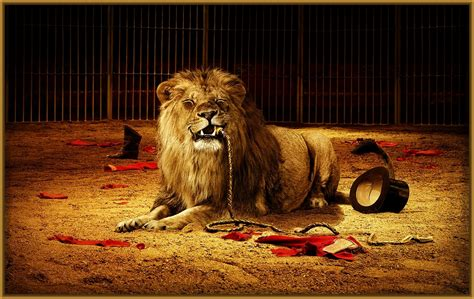 imagenes la leones imagenes de leones para fondo de pantalla archivos
