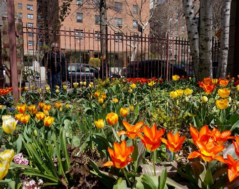 West Side Tulip Festival The Favorite Flower Question And A Tulip Festival New