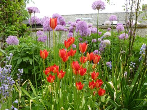 our cottage garden 17 best images about our cottage garden on