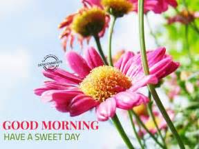 sweet day images morning a sweet day desicomments