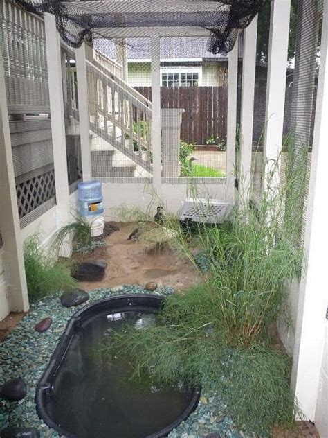 duck pond ideas backyard chickens
