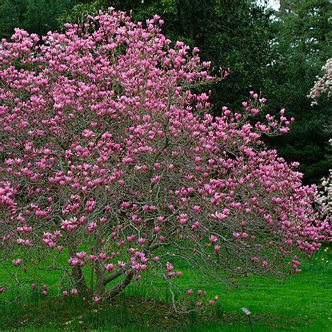 zone 5 flowering trees