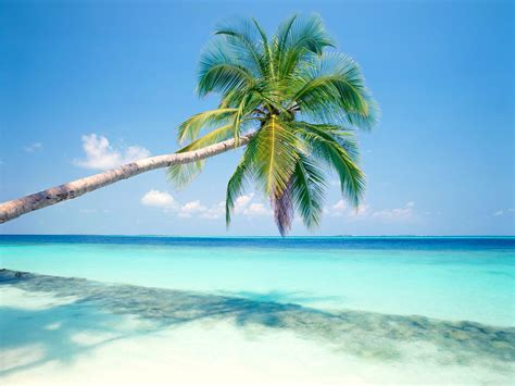 free tropical beach with palm tree computer desktop wallpaper