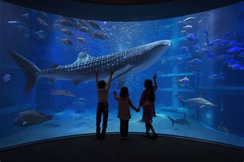 japanese aquarium 8 aquariums you can only visit in japan tsunagu japan