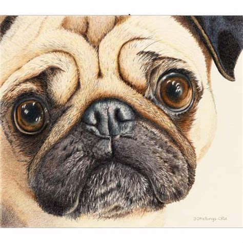 cool drawings of pugs 17 best images about dogs on realistic pencil drawings drawings and