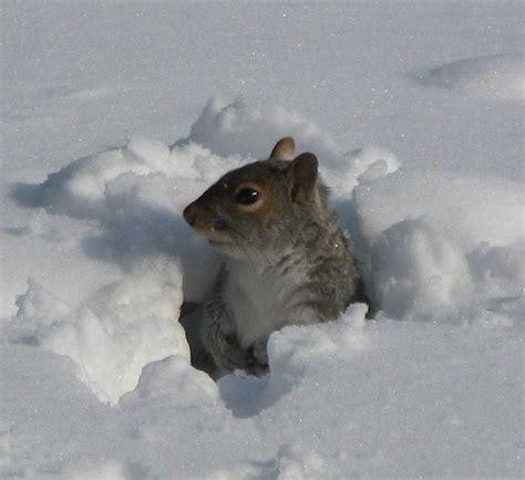 animals in the winter animals prepare for winter blog a z animals