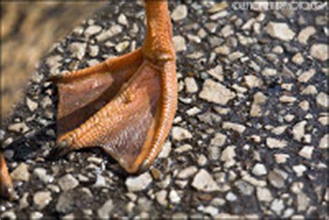 Alat Ketok Kaki Refleksi Duri Landak Kayu biologi edutainment bab i ciri ciri khusus makhluk hidup