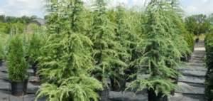 atlanta landscaping company