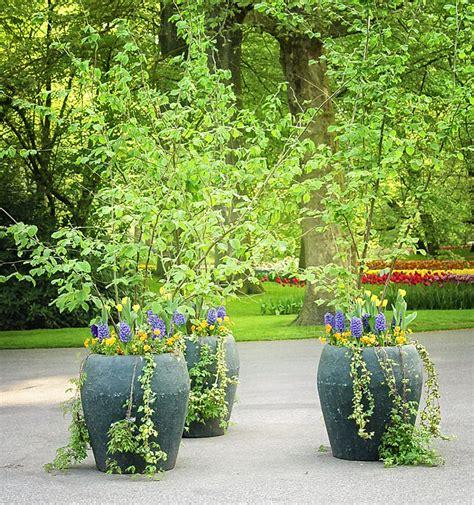 Garden Planters Uk by Choosing A Large Outdoor Planters Front Yard Landscaping